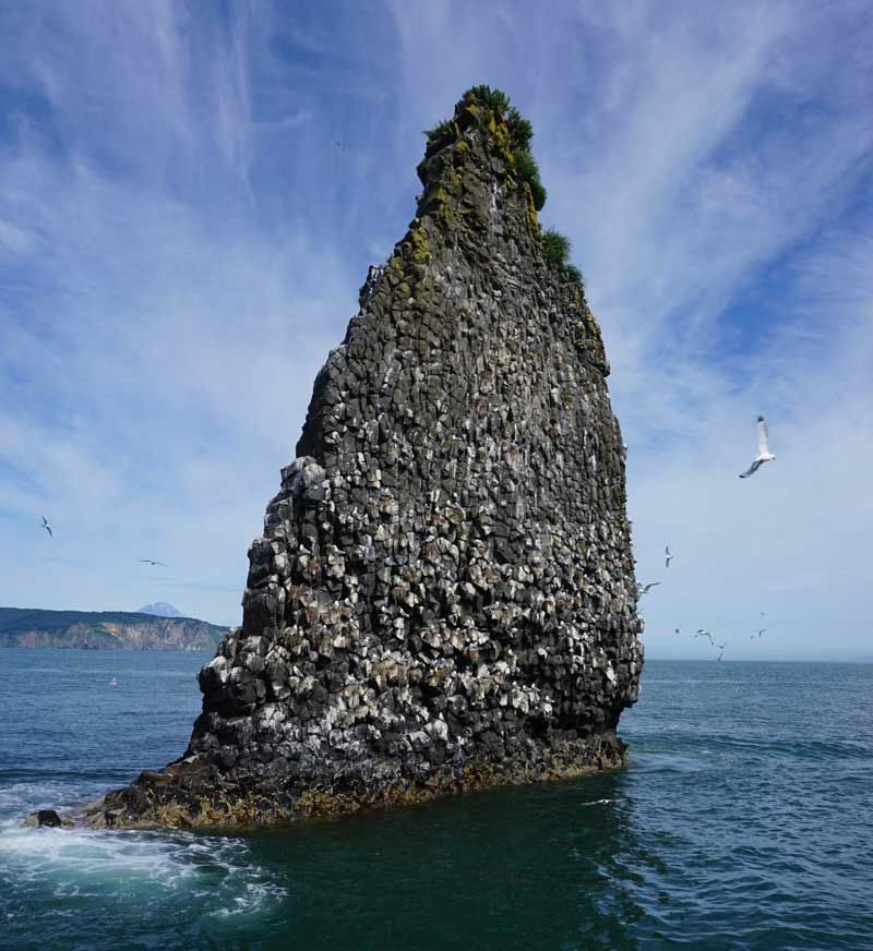 Sea cliffs studded with seabirds, Avacha Bay, Kamchatka. Photo credit: Jake Smith
