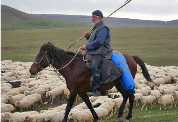 A Georgian shepherd rounds up his flock. Photo credit: Mariana Noble