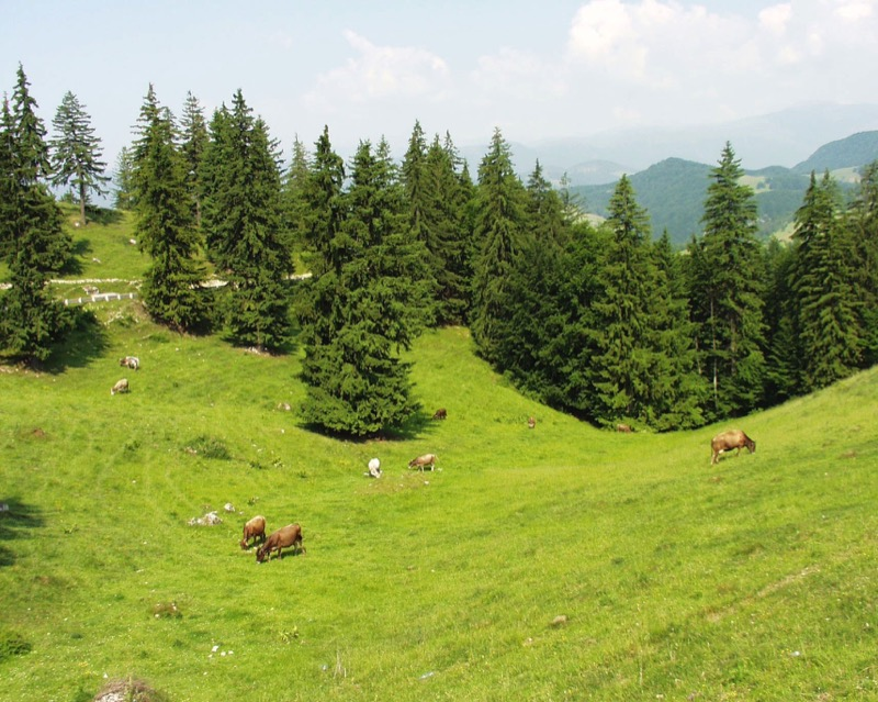 Bulgaria's rugged countryside