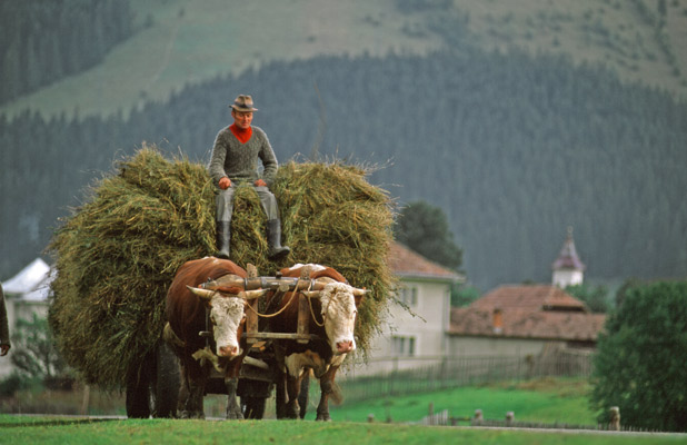 Traditional methods of farming and harvesting are preserved in Romania. Photo credit: Peter Guttman