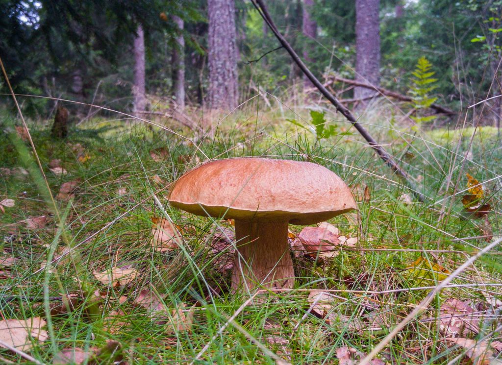 Mushroom-picking is undoubtedly one of Lithuanians' favorite activities.