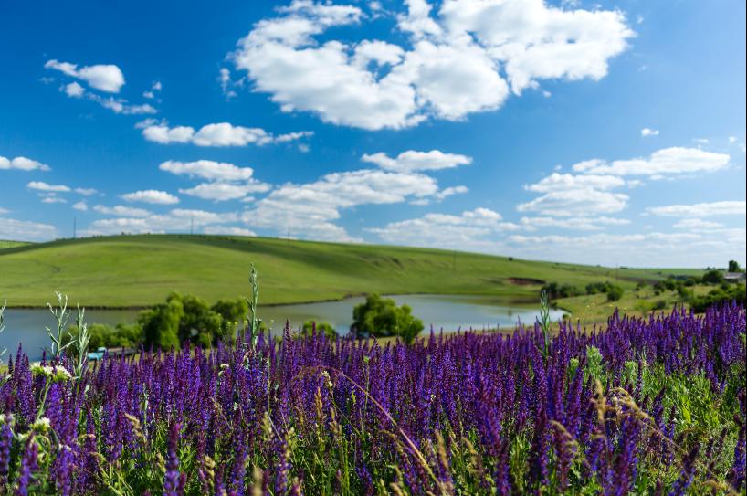Cobusca Noua village lavender fields. Photo credit: Cobusca Noua Village