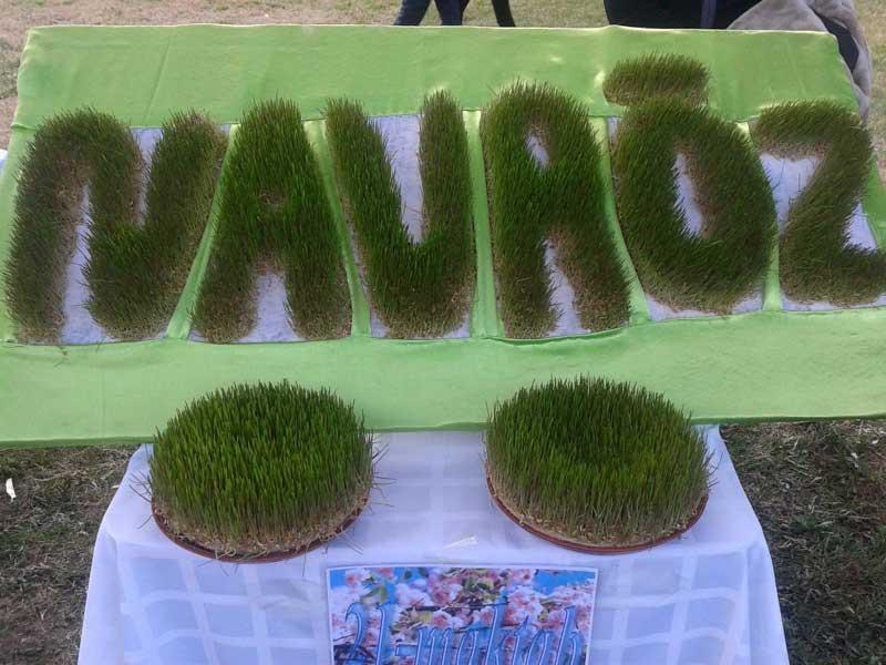 Used in sumalak, this sprouted wheatgrass spells out Navruz. Photo credit: Regina Mnatsakanian